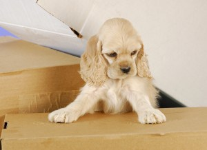 5 dog friendly ways to move house